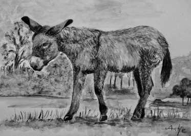 antje-mo-donkey