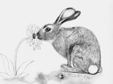 Hop_to_Smell_the_Flowers
